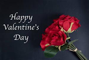 Фотография День всех влюблённых Роза Букет Сером фоне Английская Слова Красная цветок