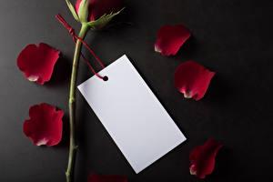 Фотографии День святого Валентина Розы Сером фоне Шаблон поздравительной открытки Лепестков Бордовый Лист бумаги Цветы