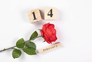 Фотография День всех влюблённых Роза Белом фоне Английская Слова Красная цветок