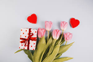 Фотографии День всех влюблённых Тюльпан Серый фон Розовая Подарки Сердечко цветок