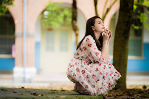 Картинка Азиатки Боке Позирует Сидящие Платья Шатенки девушка