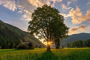 Картинка Австрия Гора Рассветы и закаты Лучи света Дерева Траве Ramsau Природа