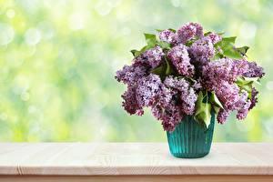 Фото Букет Сирень Вазе цветок