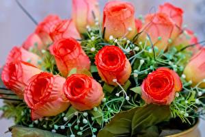 Картинка Букет Розы Вблизи Цветы