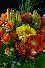 Обои для рабочего стола Букет Роза Герберы Тюльпаны цветок