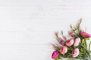 Фотография Букеты Роза Шаблон поздравительной открытки Цветы