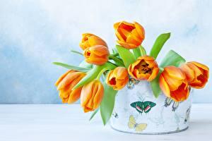 Фотография Букет Тюльпан Коробки Оранжевая цветок