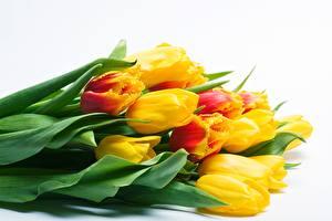 Фотография Букет Тюльпан Белом фоне Желтая цветок