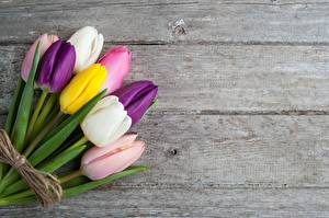 Фото Букеты Тюльпаны Доски Разноцветные Шаблон поздравительной открытки цветок