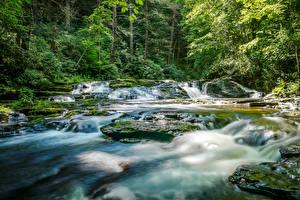 Обои для рабочего стола Хорватия Лес Водопады Мха Rastoke Slunj Природа