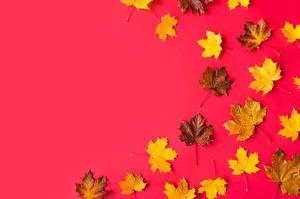 Фотографии Листья Шаблон поздравительной открытки Клёна Красном фоне