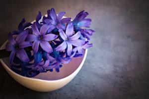 Обои Гиацинты Вблизи Фиолетовая