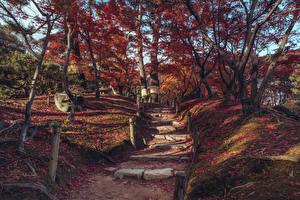 Обои Япония Парки Осенние Дерева Листва Лестницы Shukkeien Garden Hiroshima Природа