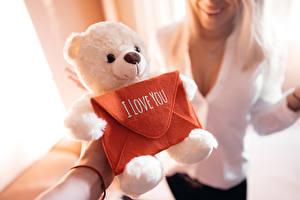 Фотография Любовь Плюшевый мишка Игрушка День всех влюблённых Английский Боке