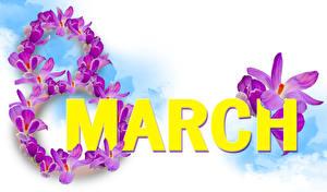 Фотография Международный женский день Шафран Белом фоне Английская Слова Фиолетовая цветок