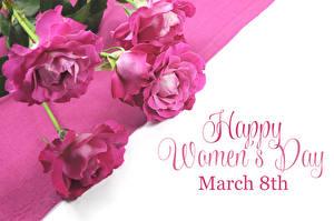 Картинка Международный женский день Роза Белом фоне Английская Слова Розовая цветок