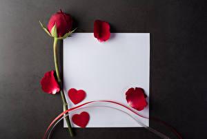 Фотография Розы Сером фоне Шаблон поздравительной открытки Лист бумаги Лепестков Серце Красных Цветы