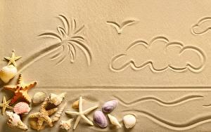 Обои Ракушки Песок Пальма Облачно