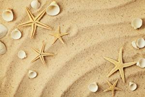 Картинки Ракушки Морские звезды Песка
