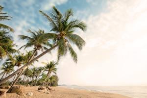 Картинки Небо Пальмы Пляж Деревья Природа