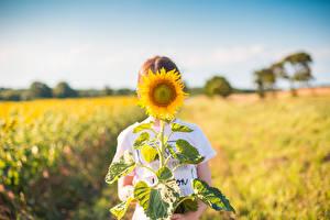 Фотографии Подсолнечник Поля Размытый фон цветок
