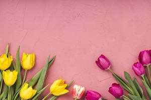 Картинка Тюльпан Цветной фон Шаблон поздравительной открытки цветок