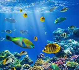 Картинки Подводный мир Рыбы Кораллы