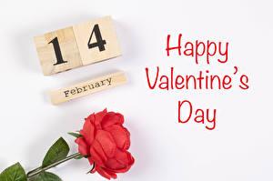 Обои День всех влюблённых Роза Белом фоне Английская Слова Красная цветок