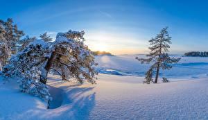 Картинки Зимние Финляндия Утро Деревья Снега Kotka-Hamina Природа