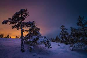 Фото Зима Рассвет и закат Вечер Финляндия Снега Дерева Southwest Finland