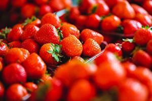 Фотография Ягоды Клубника Много Вблизи Красная Размытый фон Пища