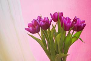 Фотография Букет Тюльпаны Цветной фон Цветы