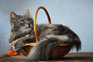 Фотография Кошки Корзина Взгляд Серые Животные