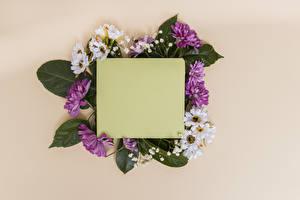 Обои Хризантемы Цветной фон Шаблон поздравительной открытки Лист бумаги цветок