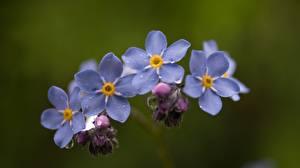 Фото Крупным планом Боке Цветок Цветы