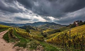Обои Германия Поля Осенние Пейзаж Виноградник Холм Кустов Природа