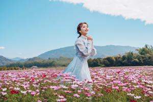 Обои Луга Азиатки Космея Платья Шатенки Миленькие девушка Цветы