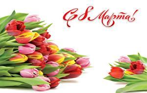 Картинки Международный женский день Тюльпаны Белый фон Слово - Надпись Русские Цветы