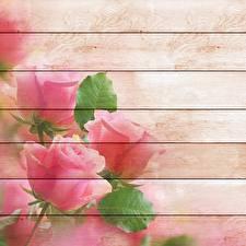 Фото Рисованные Роза Доски Шаблон поздравительной открытки цветок