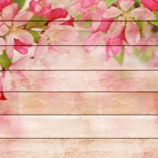 Фотографии Рисованные Доски Шаблон поздравительной открытки цветок
