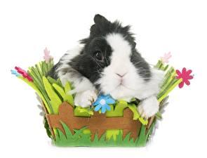 Обои Кролик Белым фоном Корзины животное
