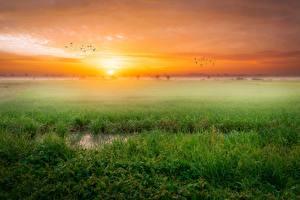 Картинки Пейзаж Рассвет и закат Траве Тумане