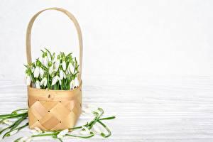Фотографии Галантус Корзина Шаблон поздравительной открытки цветок