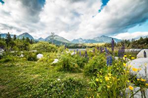 Картинка Камни Люпин Пейзаж Гора Словения Трава Tatra mountains Природа