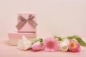 Обои Тюльпан Международный женский день Гербера Цветной фон Подарок Бантики Коробки цветок