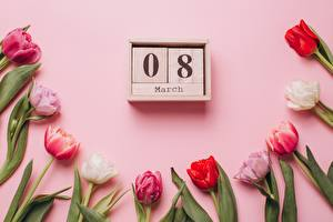 Обои для рабочего стола Тюльпан Международный женский день Розовая Цветной фон Календаря цветок