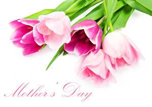 Картинка Тюльпан День матери Белом фоне Английская Слова цветок