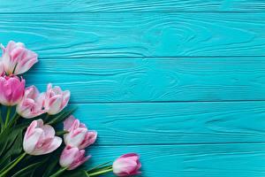 Фотография Тюльпан Доски Шаблон поздравительной открытки цветок