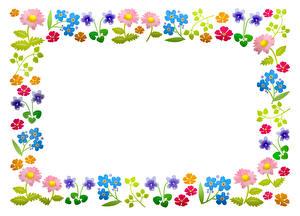 Фотографии Белом фоне Разноцветные Шаблон поздравительной открытки Цветы