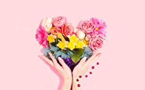 Фотографии Букет Руки Серце Розовых Цветной фон
